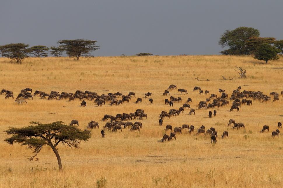是非洲唯一仍有众多陆地动物迁移的地区,也是目前保存最完好的原始